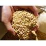 無農薬有機栽培お米ひのひかり
