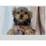 純血種からmixまで可愛い子犬が産まれています