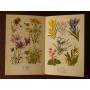 オランダのアンティーク植物図鑑